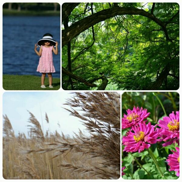350 8월 '우리 주변의 자연환경 사진' (나무, 호수, 갈대, 꽃 등)